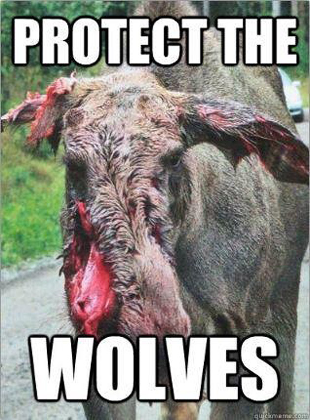Wolf MEME clear