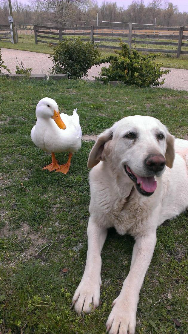 Duck & Dog Best Friends